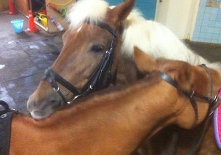 Расслабляющий массаж для лошадей