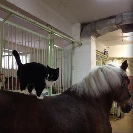 лошади умеют работать в команде