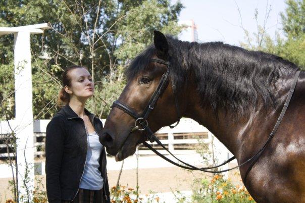 Майор - иппотерапевтический конь