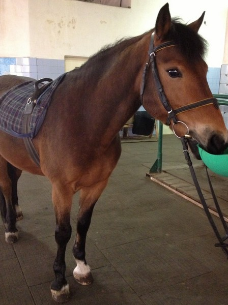 Парламент - конь для иппотерапии